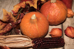Autumn decoration with leafs, pumpkins and corn Stock Photos