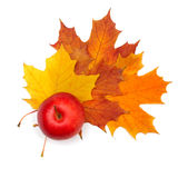 Autumn decoration - maple leaf and apple Stock Photos
