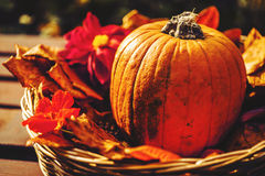Autumn decoration. With pumpkin in basket Royalty Free Stock Photo
