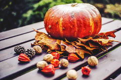 Autumn decoration. With pumpkin, leaves walnuts, cone and physalis Royalty Free Stock Photo