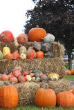 Autumn Decoration with pumpkins. On farm Royalty Free Stock Photography