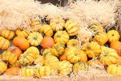 Autumn Decoration pumpkins royalty free stock image