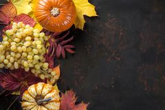 Autumn decoration with pumpkins and grapes on colorful leaves on dark background. Top view with free space for your text stock photos