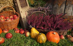 Autumn decoration, pumpkins, squash, heather flowers and wicker basket with apples stock photos