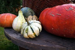 Autumn decoration, pumpkins, winter squash Royalty Free Stock Image