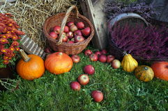 Autumn decoration, red and green apples in a wicker basket on straw, pumpkins, squash, heather flowers and chrysanthemum flowers royalty free stock image