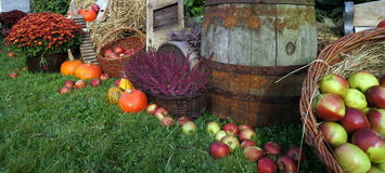 Autumn decoration, red and green apples in a wicker basket on straw, pumpkins, squash, heather flowers and chrysanthemum flowers royalty free stock images