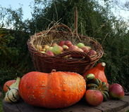 Autumn decoration, red and green apples in a wicker basket on straw, pumpkins, winter squash. Autumn decoration, red and green apples in a brown wicker basket on royalty free stock images
