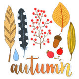 Autumn decoration set with leaves, berries and feathers. Vector collection for holiday design Stock Image