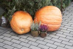 Autumn decoration on the sidewalk Stock Images