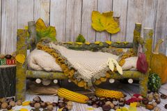 Autumn arrangement for new baby and baby photography Stock Photos