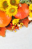 Autumn decoration with sunflowers and pumpkins Royalty Free Stock Photo