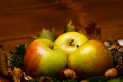 Autumn decoration. With two apples, acorn, chestnut and a fircone in a wooden bowl on wood Stock Image