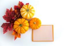 Autumn decoration. On the white background Royalty Free Stock Photo