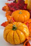 Autumn decoration. On the white background Royalty Free Stock Photography