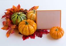 Autumn decoration. On the white background Royalty Free Stock Image
