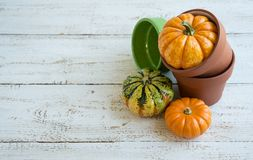Autumn decoration. On the white wooden background Stock Images