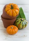Autumn decoration. On the  wooden background Royalty Free Stock Photos