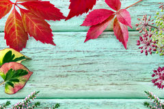 Autumn - decoration Royalty Free Stock Image