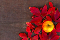 Autumn Decoration On Wooden Background Royalty Free Stock Photography