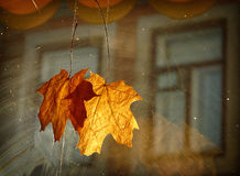 Autumn decoration. Yellowed maple leaves as a decoration in a cafe Stock Images