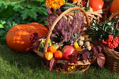 Autumn decorations Royalty Free Stock Photo