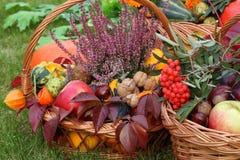 Autumn decorations Stock Photography