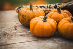 Autumn decorations Royalty Free Stock Image