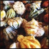 Autumn decorative gourds close up Stock Photography