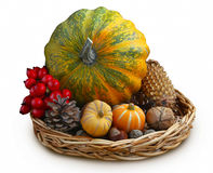 Autumn decorative pumpkins, cones and nuts Royalty Free Stock Images
