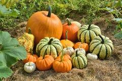 Autumn decorative pumpkins on field Stock Image