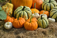 Autumn decorative pumpkins on field Royalty Free Stock Images