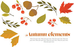 Autumn decorative set. Set of autumn leaves, berries and acorns Stock Photography