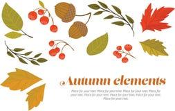 Autumn decorative set. Set of autumn leaves, berries and acorns royalty free illustration