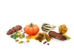 Autumn decorative squashes Royalty Free Stock Photo