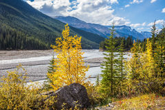 Autumn decrease in river water. Rocky Mountains. The picturesque valley in Jasper National Park Stock Photos