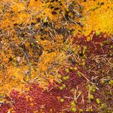 Autumn deep forest carpet Stock Photo