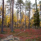 Autumn in Deep Taiga Forest, Finland Royalty Free Stock Photos