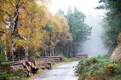 Autumn Deerpark and Djouce Woods, Ireland Stock Photography