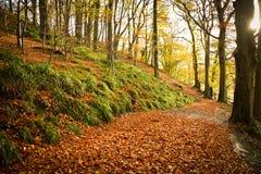 Autumn Delight Imagem de Stock