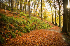Autumn Delight Stock Afbeelding