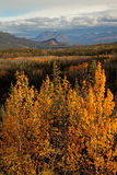 Autumn in Denali Stock Images