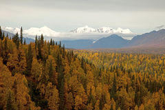 Autumn in Denali national Park Royalty Free Stock Photography