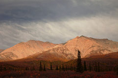 Autumn in Denali national Park Royalty Free Stock Photos