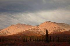 Autumn in Denali national Park Royalty Free Stock Photos