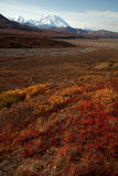 Autumn in Denali and red brush Royalty Free Stock Photo