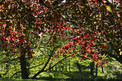 Autumn in denmark Stock Images