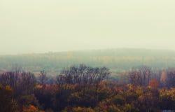 Autumn depressive forest landscape Stock Photos