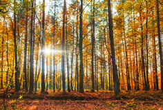 Autumn depths forest trees colorful leaves Stock Photo