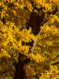 Autumn in Derbyshire. Autumn colour near Calke Park in Derbyshire, England Stock Photo